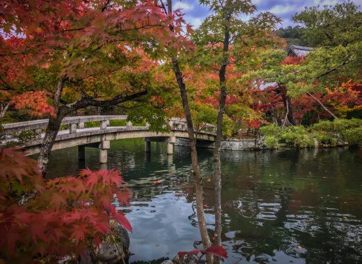 autumn leaves - Kyoto