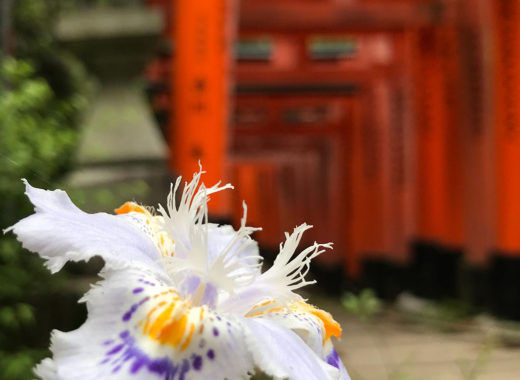 fushimi inari travel in Japan